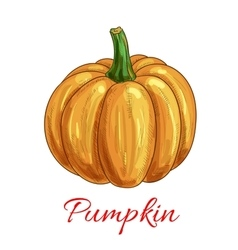 Pumpkin vegetable isolated sketch icon vector