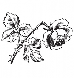 Antique rose engraving vector