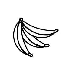Banana fruit healthy outline vector