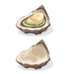 Oyster shell vector
