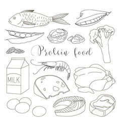 Best protein food icons vector