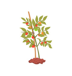 young tree plant in the ground cartoon vector image