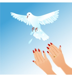 Hands of woman setting free white pigeon vector