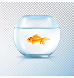 golden fish bowl realistic transparent vector image