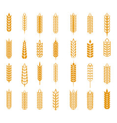 wheat rye and barley ear set vector image vector image