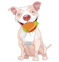 Pit bull dog eats hamburger vector