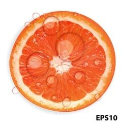 Fresh juicy grapefruit background vector image