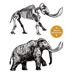 Sketch hand drawn mammoth vector