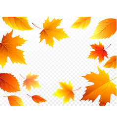 Autumn falling leaves on transparent checkered vector