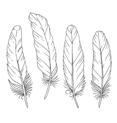 Hand drawn feathers set on white background vector