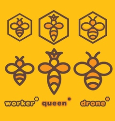 Bee specimens vector