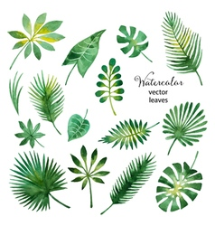 Set of watercolor green leaves vector