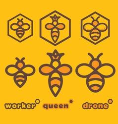 Bee specimens vector