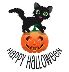 black cat and pumpkin for halloween vector image