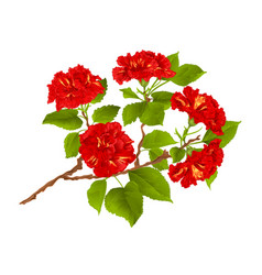 branch red hibiscus tropical flowers vector image