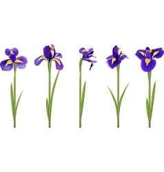 Set with five detailed irises vector
