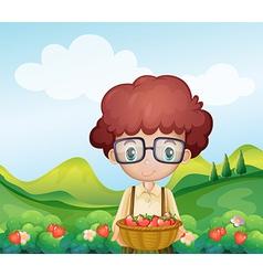 A boy harvesting strawberries vector image vector image