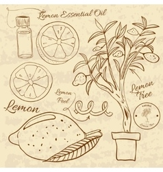 Hand drawn of a lemon set Web vector image