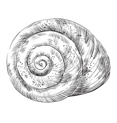 Hand drawing seashell-16 vector