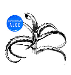 hand drawn aloe vera plant vector image