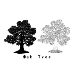 Oak Tree Silhouette Contours and Inscriptions vector image