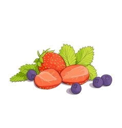some strawberries and blueberries vector image