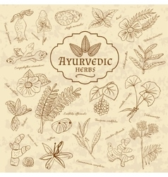 Retro of ayurvedic herbs set of web vector