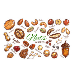 nuts and seeds colorful collection vector image