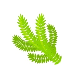 Pine or spruce christmas tree branch vector
