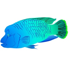 Napoleon fish vector