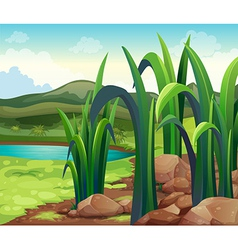 A river near the hills vector image vector image