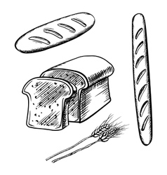 Sliced bread long loaf and baguette vector