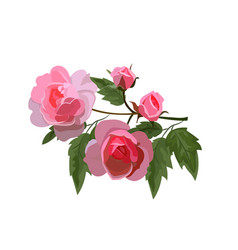 Bouquet of roses vector