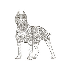 american pit bull terrier coloring book for vector image