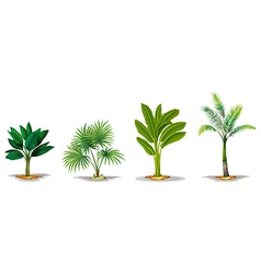 Different trees vector