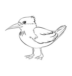 Doodle animal for bird vector