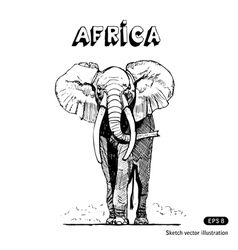 African elephant in savanna vector image