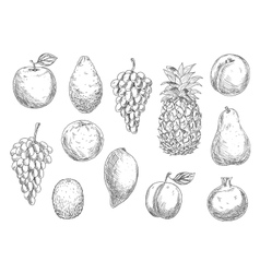 Sketch of vegetarian fruits in retro style vector