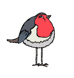 Cute adorable red robin bird isolated on a white vector