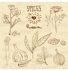 Spices in russia a collection of distinctive vector
