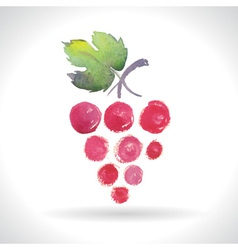 Watercolor of grapes vector
