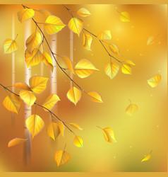 Birch leaves autumn vector