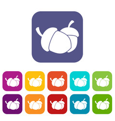 Acorn icons set vector