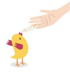 hand feeding chicken vector image vector image