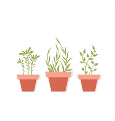 Potted plants vector