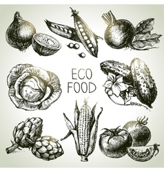 Hand drawn sketch vegetable set Eco foods vector image