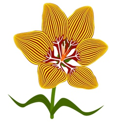 Fire lily flower vector