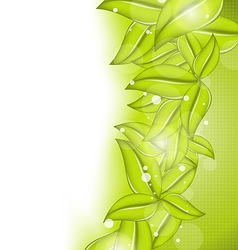 Nature background with eco green leaves vector image