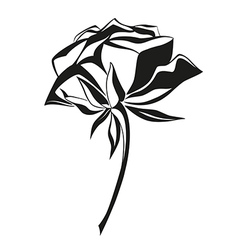 Black and white rose vector image