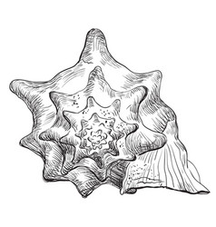 Hand drawing seashell-17 vector